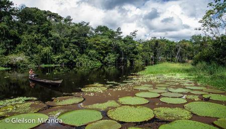 Amazônia 11